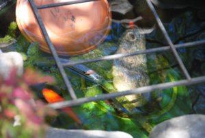 2016 goldfish-narcissus